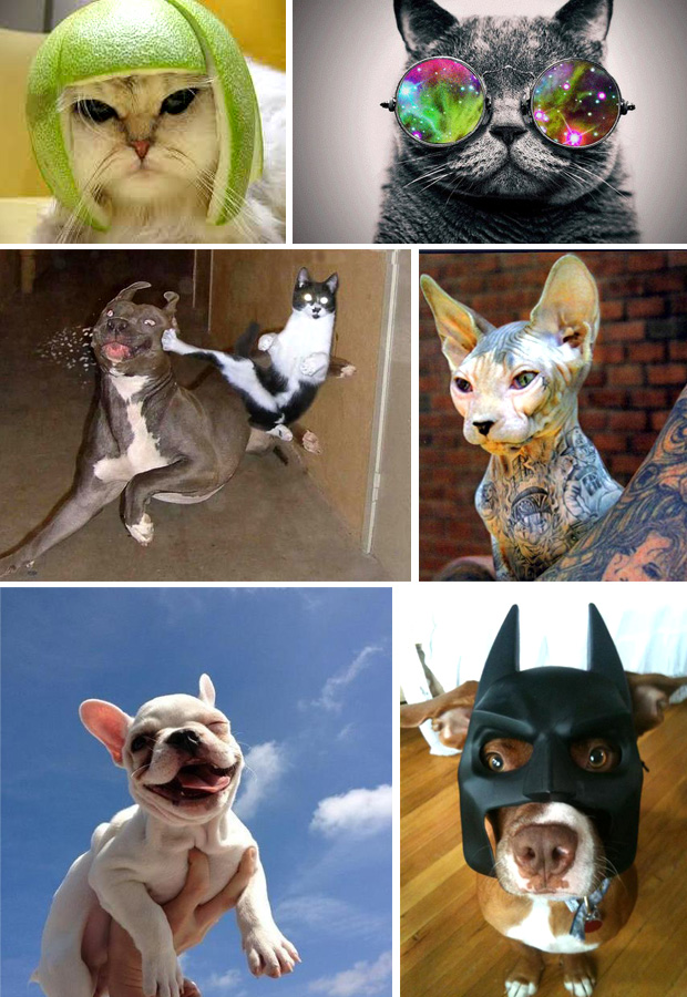 Cats vs. Dogs in Opperclaes (facebook pagina foto's)
