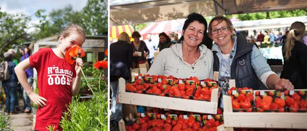 Rotterdamse oogst festival
