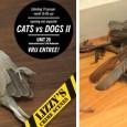 Cats vs Dogs, de tweede ronde. Na het succes van de eerste ronde van Cats vs Dogs bij Opperclaes in september vorig jaar is het...