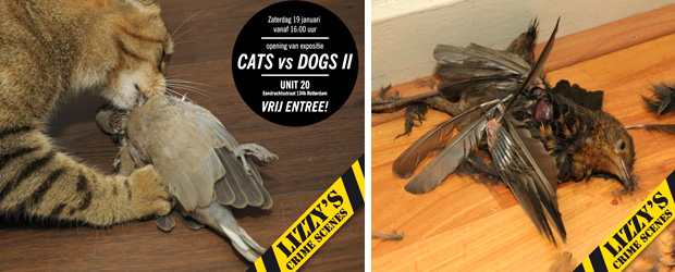 Cats vs Dogs 2 in galerie Unit20 (c Lizzys Crime Scenes)